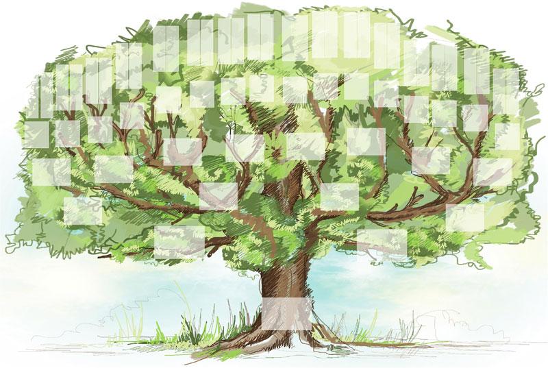 Les arbres et les branches de la famille guelfucci - Arbre genealogique avec photo ...